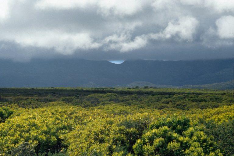 Sudafrica 09/33